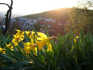 Beautifull spring