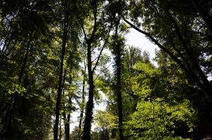 Green trees i