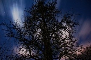 Tree 8946