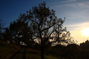 Tree in autumn sun